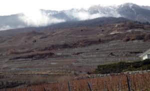 vini-svizzeri-vallese-2