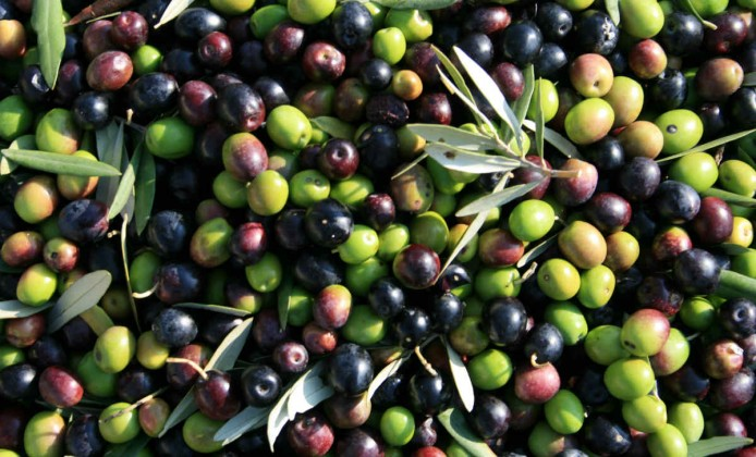 olio-garda-dop-olive