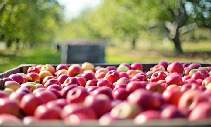 eataly genova settimana della mela