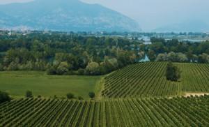 Autunno in Franciacorta: appuntamenti per scoprire le eccellenze enogastronomiche di questa terra
