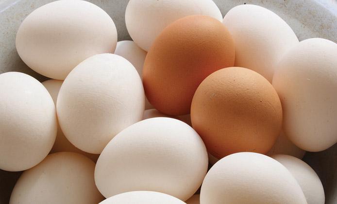 uova colori guscio