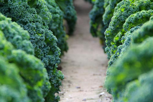 agricoltura-slowfood