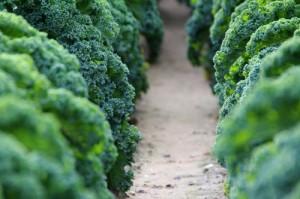 green-bistrot