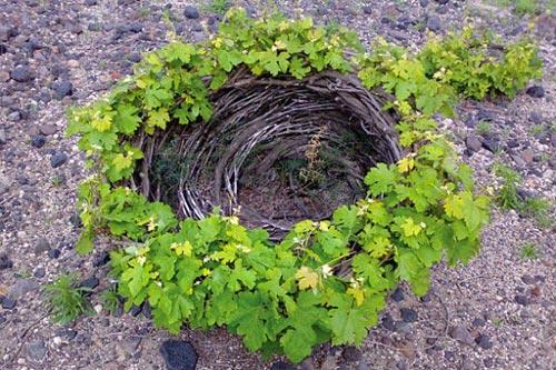 vigne-santorini