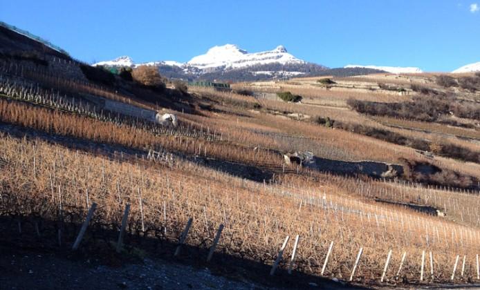 vini-svizzeri-vallese