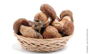 Tutto sui funghi